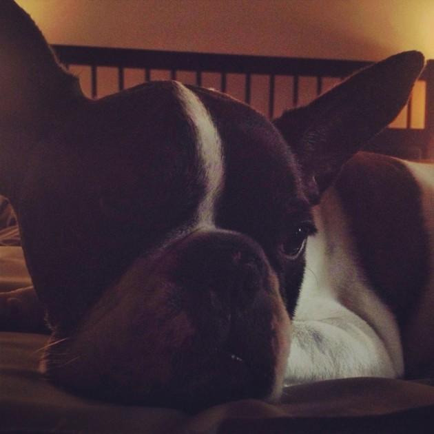 Monty's bedtime