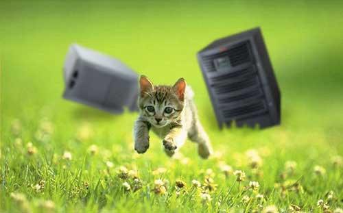 Contact Kitten
